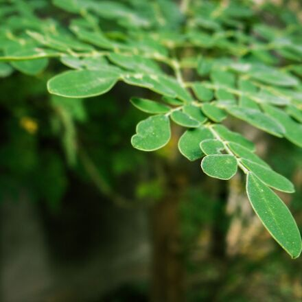 green, tree, nature, Nikon COOLPIX S3700