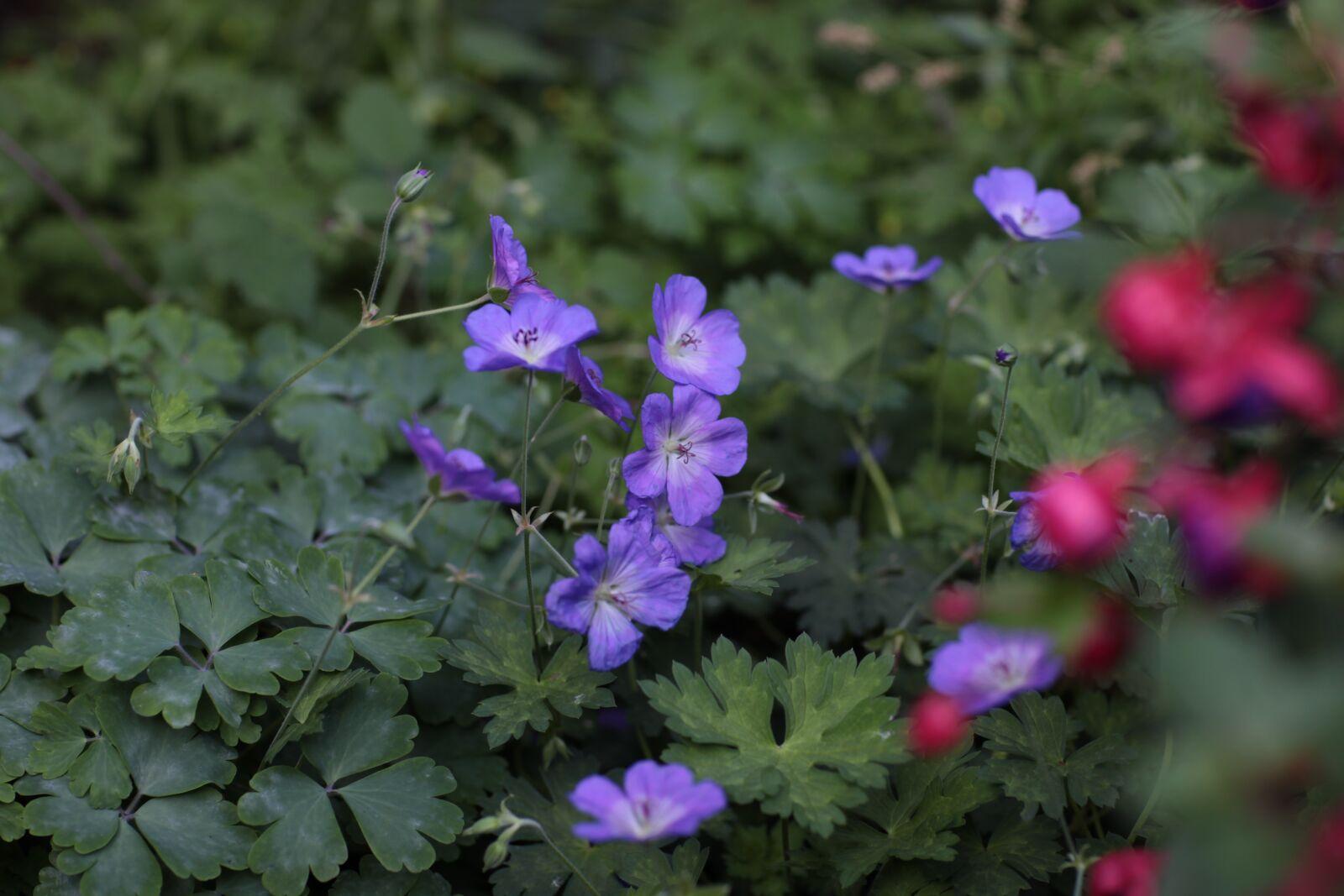 "Canon EOS 5D Mark II sample photo. ""Blue, blue flowers, flowers"" photography"
