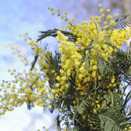 bouquet, flowers, hot, spring, Pentax K-50