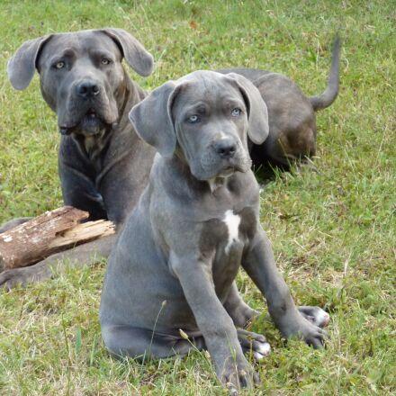 dog, puppy, mom, Panasonic DMC-TZ6