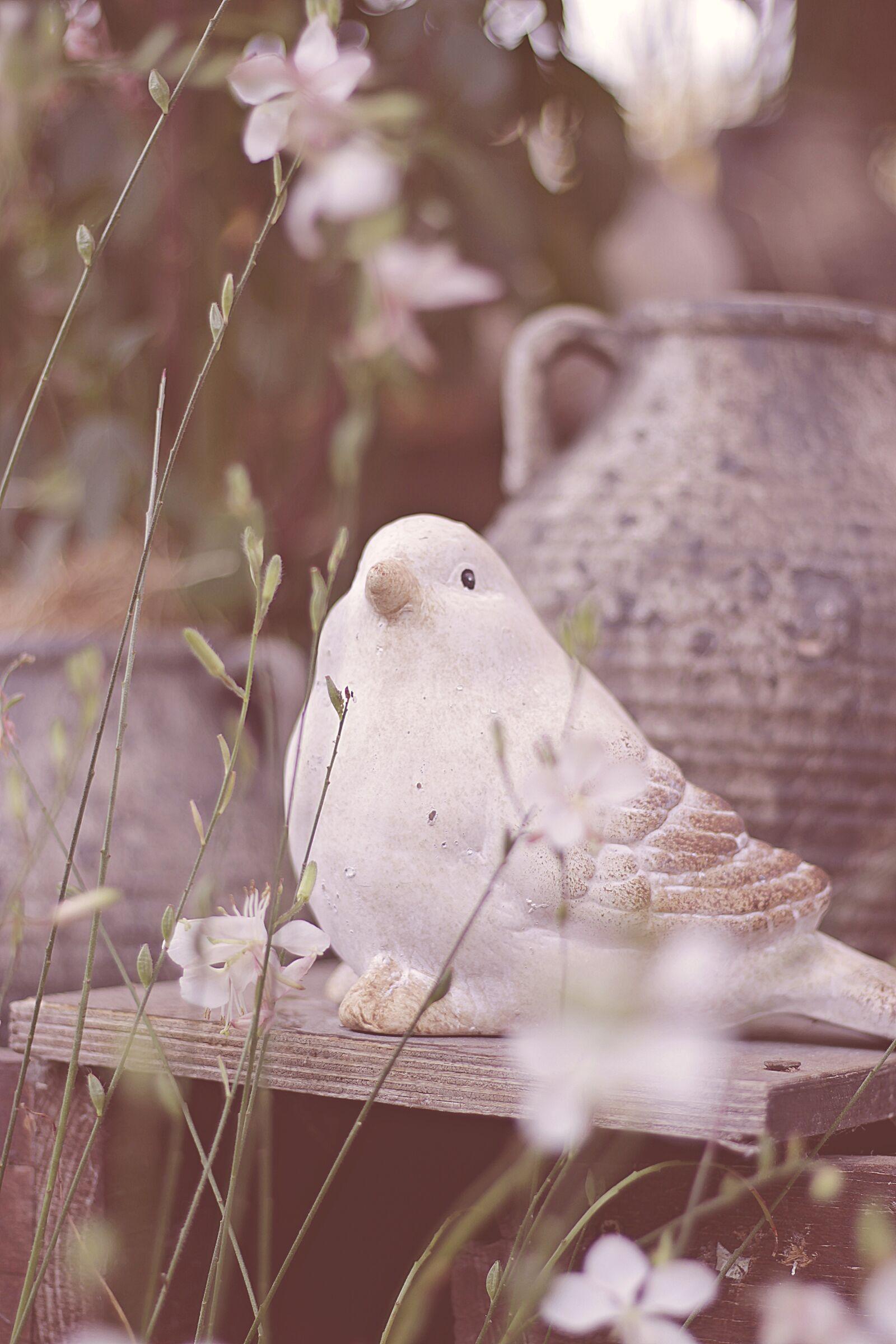 """Canon EOS 100D (EOS Rebel SL1 / EOS Kiss X7) sample photo. """"Autumn, bird, jugs"""" photography"""