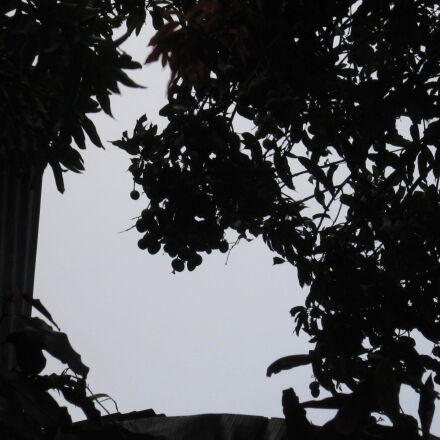 fruit, mangos, shadows, Canon POWERSHOT A3200 IS