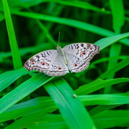 butterfly, green, wild, life, Nikon D3200