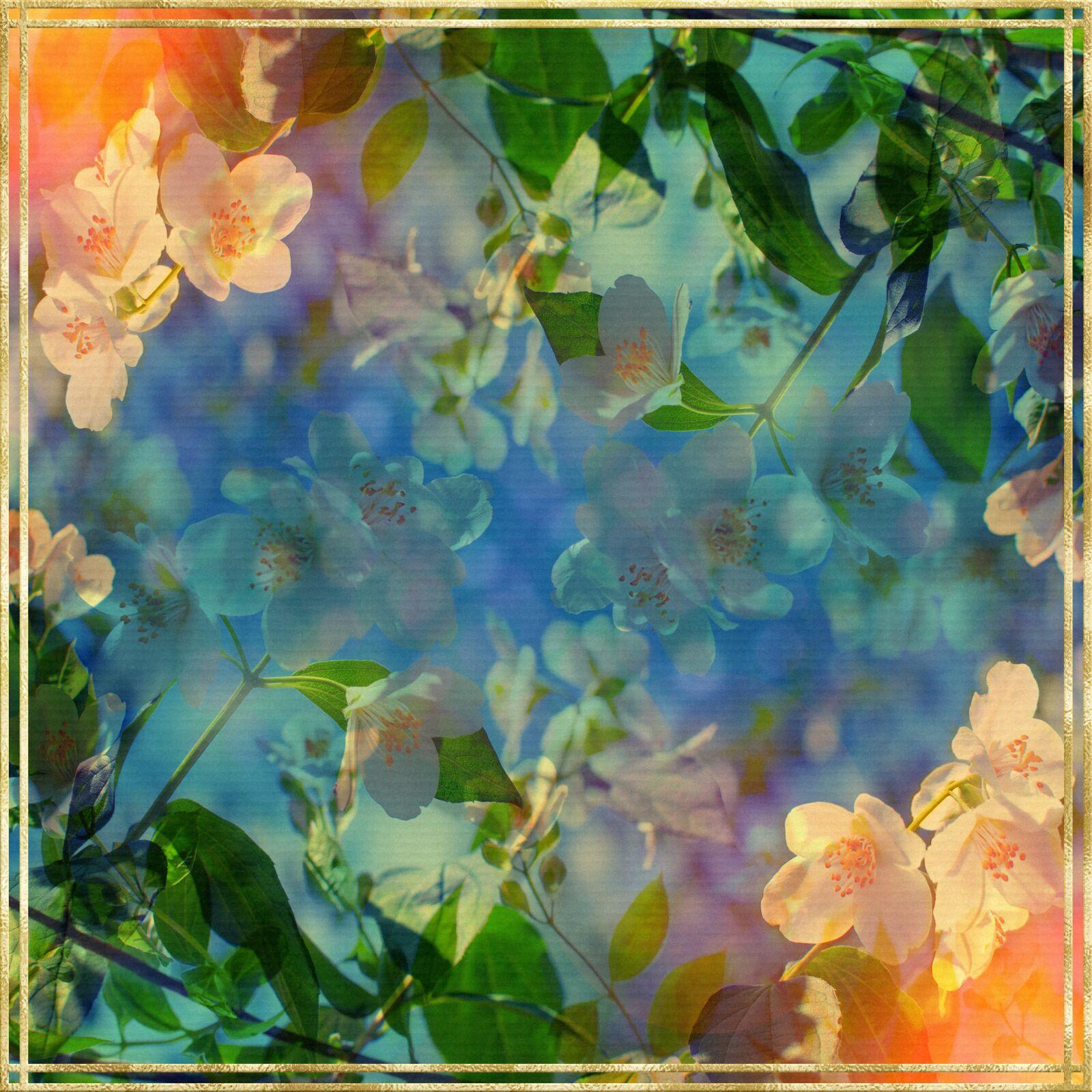 digital paper, floral, gold