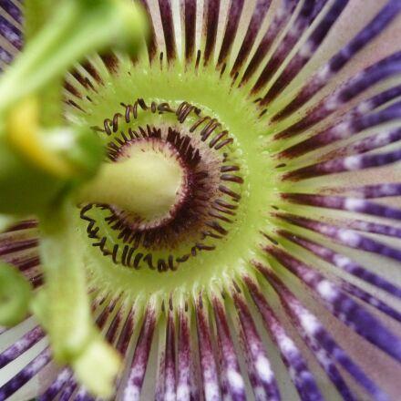 close up, flower, nature, Panasonic DMC-FS62