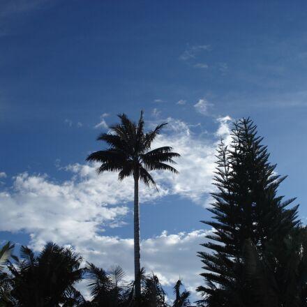 landscape, palma, tree, Sony DSC-W30