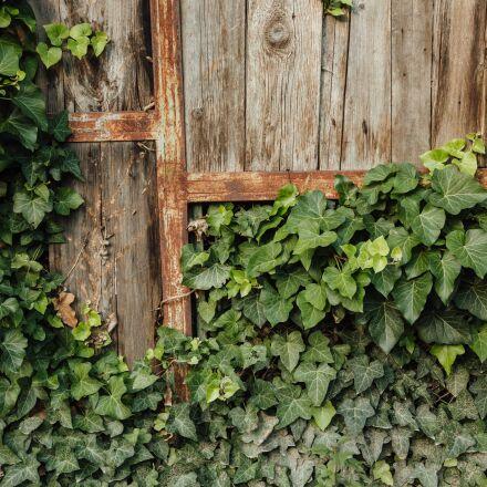 abandoned, carpentry, fence, handmade, Canon EOS 5D MARK III