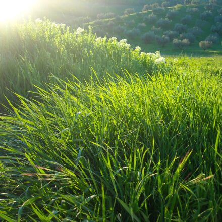 campaign, wheat, field, Nikon COOLPIX L18