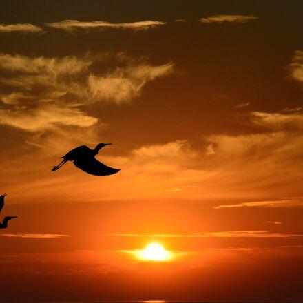 sunset, dusk, evening, Nikon D3200