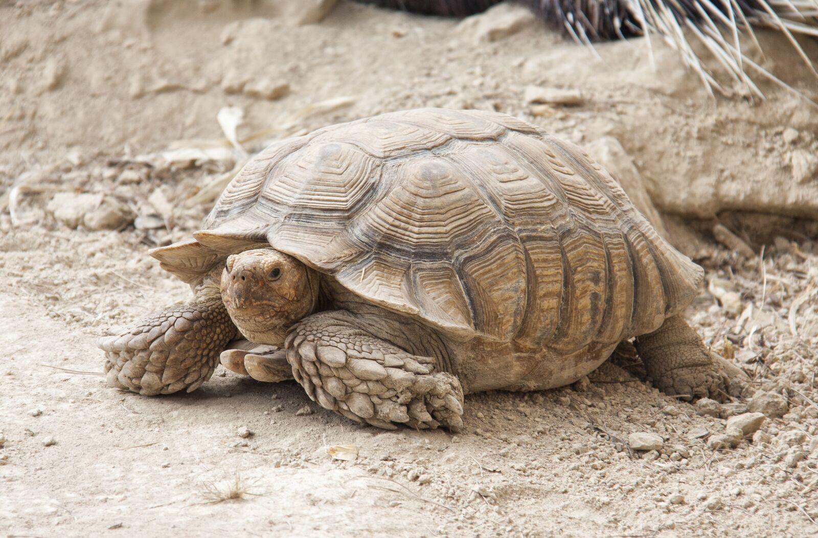 "Canon EOS 50D sample photo. ""Tortoise, turtle, animals"" photography"