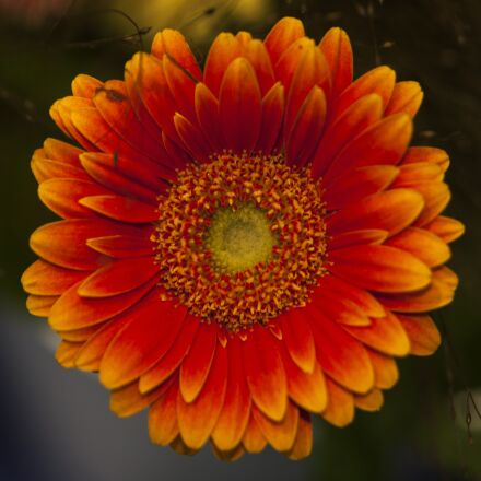 flower, flowers, summer flowers, Canon EOS 5D MARK II