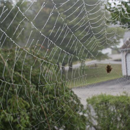 spider web, spider, web, Sony NEX-5N