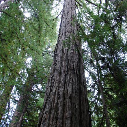 wood, nature, tree, Sony DSC-V3