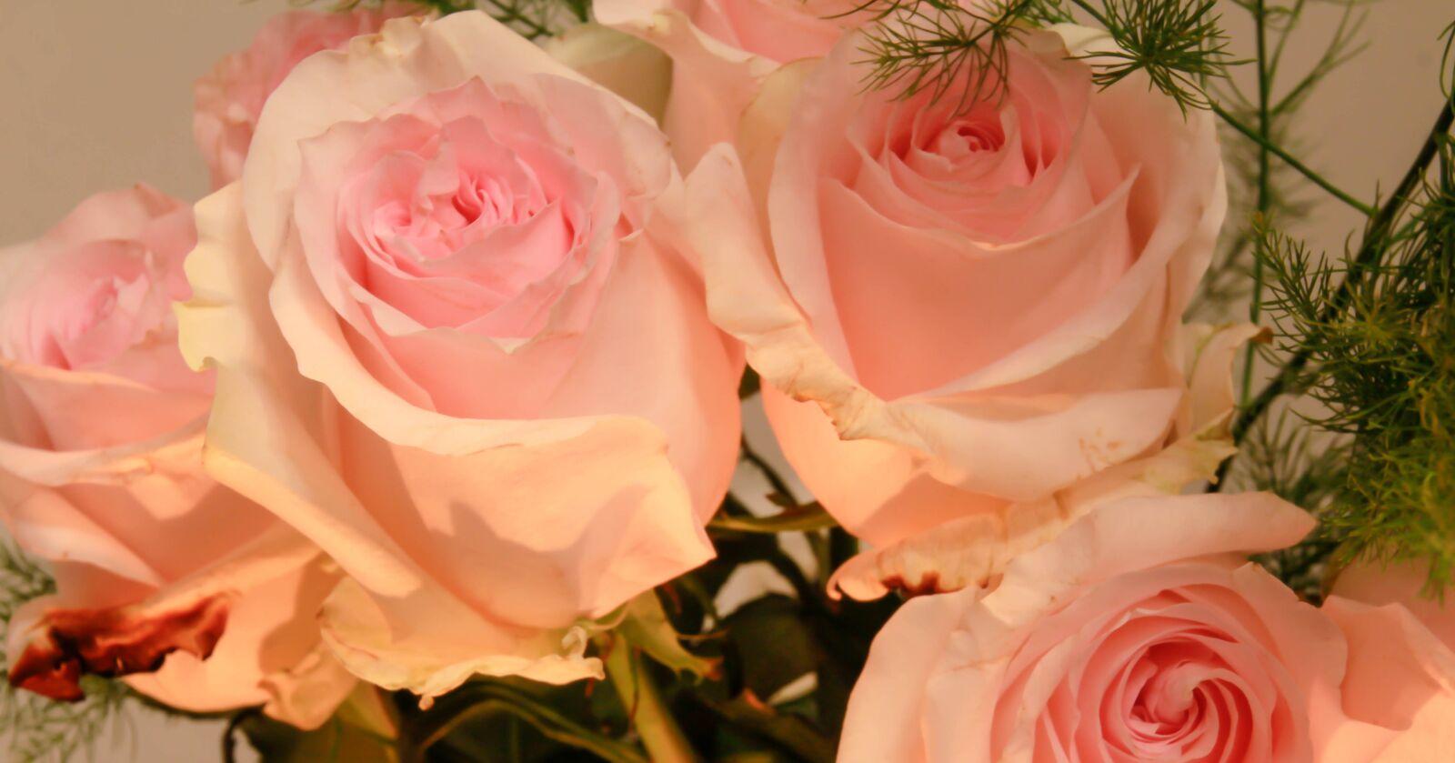"Canon EOS 60D sample photo. ""Flowers, rose, bouquet"" photography"