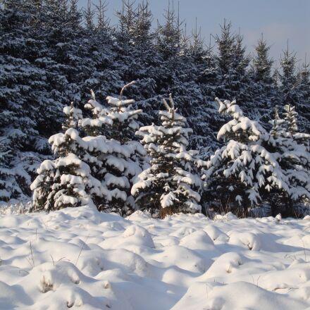 winter, snow, white, Sony DSC-W210