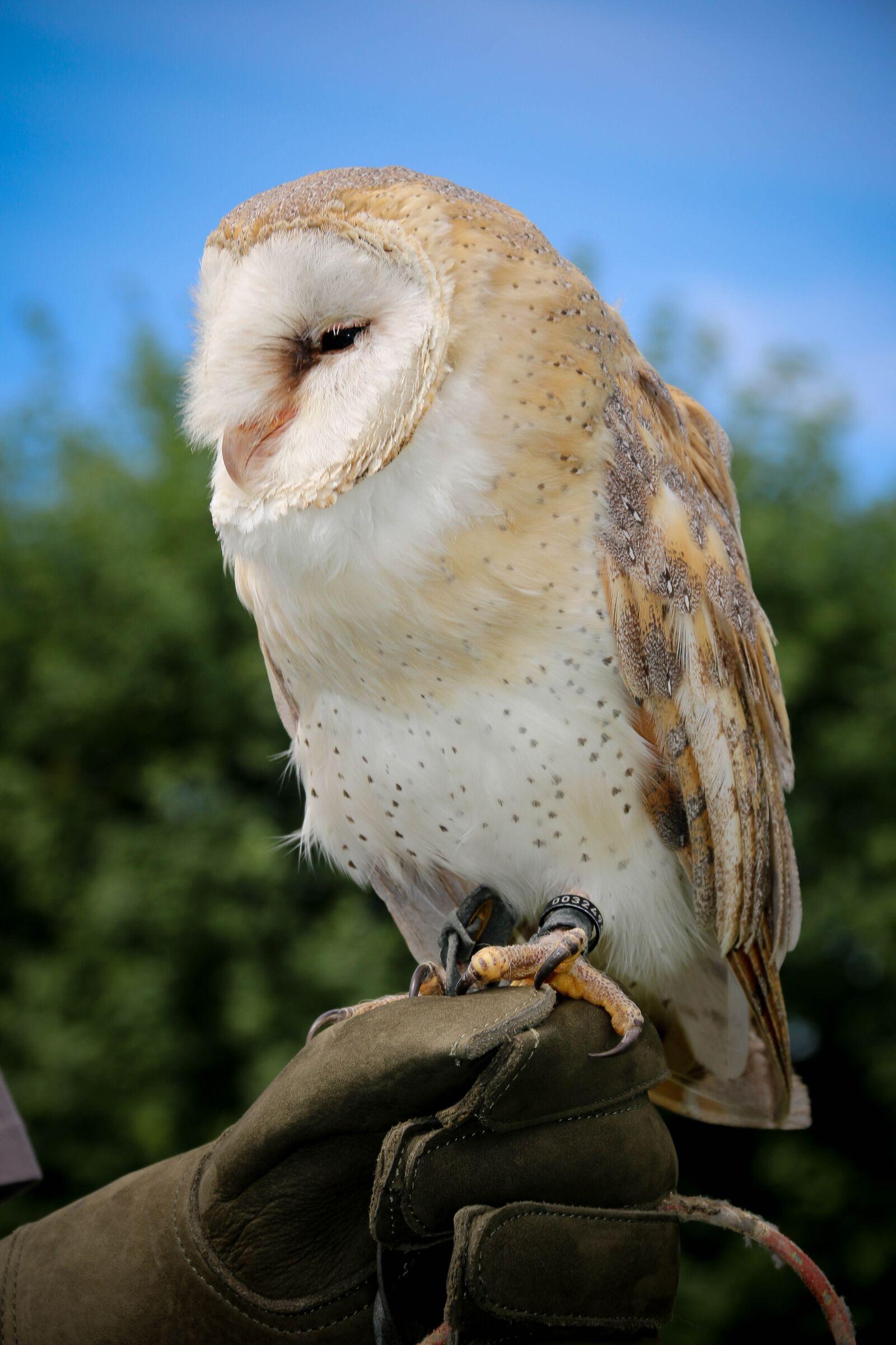 "Canon EOS 70D sample photo. ""Owl, raptor, nature"" photography"