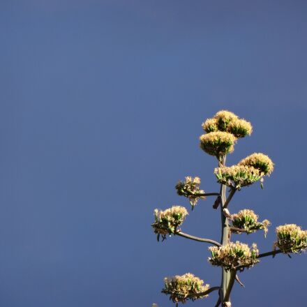 plant, blue sky, thunderstorm, Sony DSC-WX200