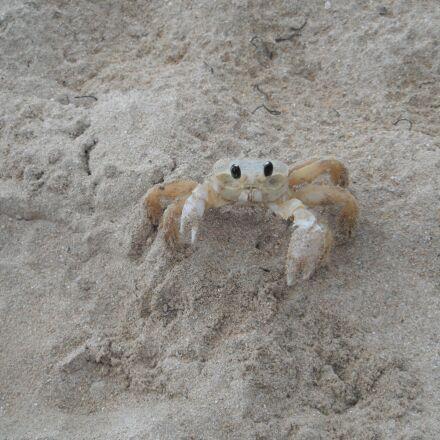 crab, shell, beach, Fujifilm FinePix Z70