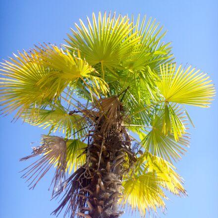 palm tree, summer, sun, Panasonic DMC-FT25