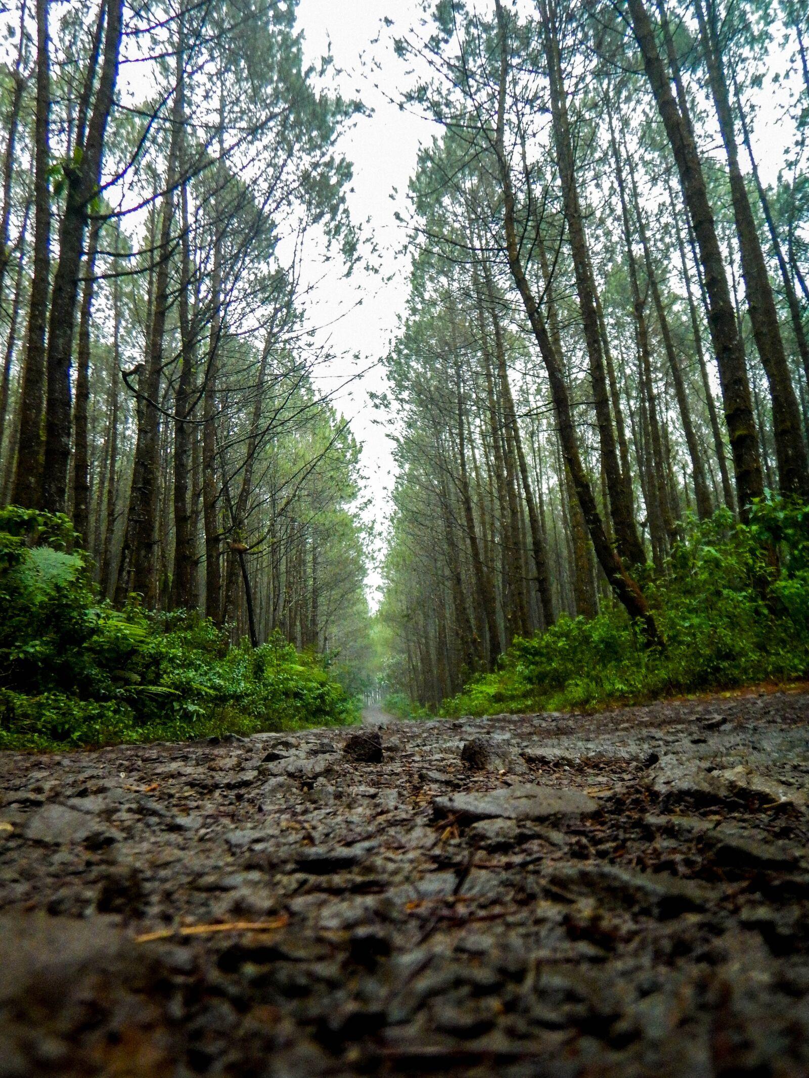 "Nikon Coolpix AW120 sample photo. ""Road, trail, pine"" photography"