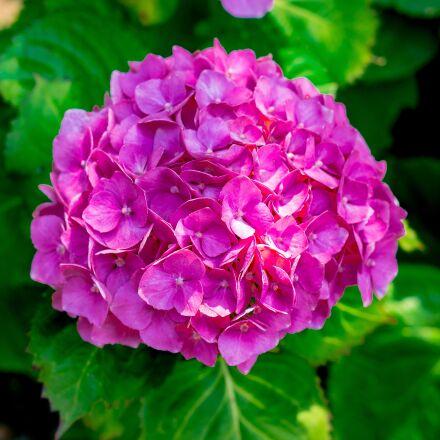 flower, bloom, rich, Pentax K-5 II S