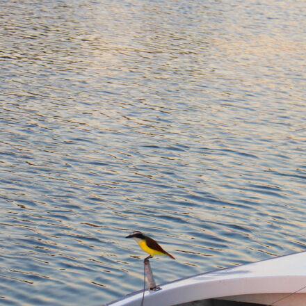 bird, boat, ocean, sea, Canon EOS REBEL T5I