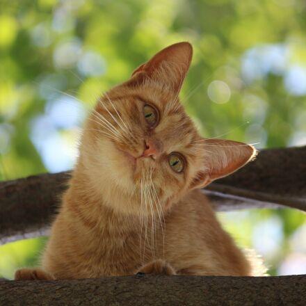 cat, animal, pet, Canon EOS 650D
