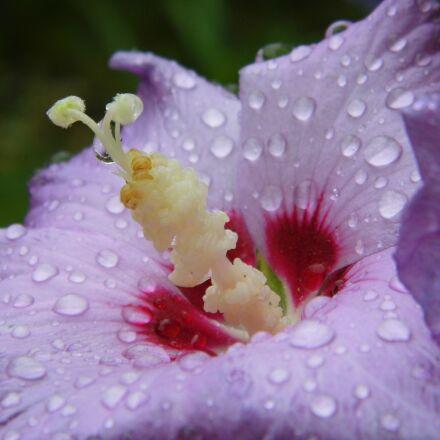 flower, nature, closeup, Panasonic DMC-LZ20