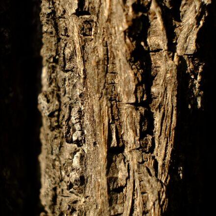 tree, bark, log, Fujifilm X-E1