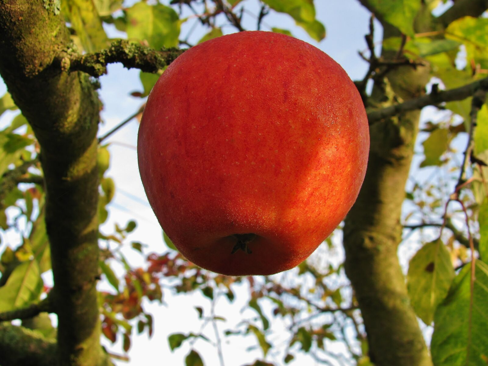 """Canon PowerShot SX110 IS sample photo. """"Apple, fruit, red"""" photography"""