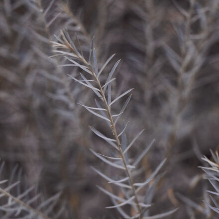 grass, nature, plant, weeds, Canon EOS 700D