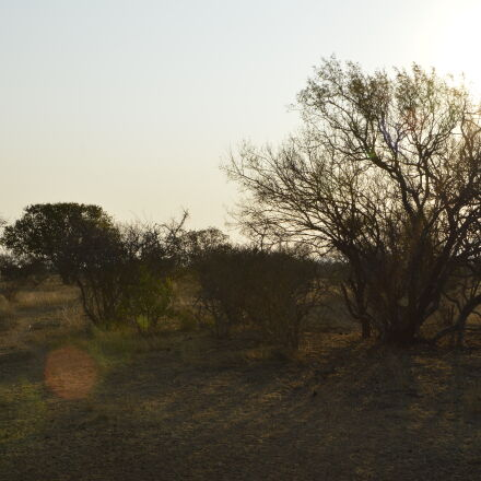 bush, bushveld, evening, sun, Nikon D3200