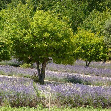 provence, flowers, nature, Panasonic DMC-TZ6