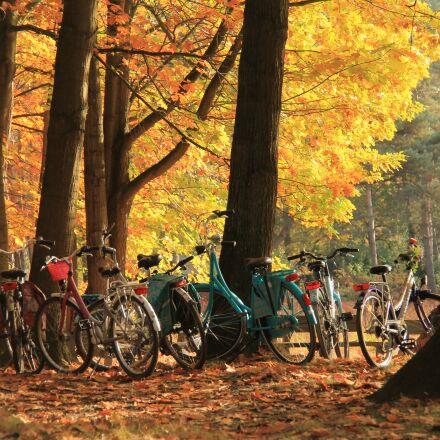 autumn, cycling, color, Canon EOS 1100D