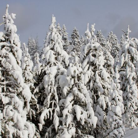 landscape, trees, forest, Canon EOS 7D