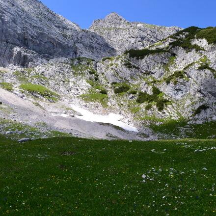 alps, flower, meadow, meadow, Nikon D3100