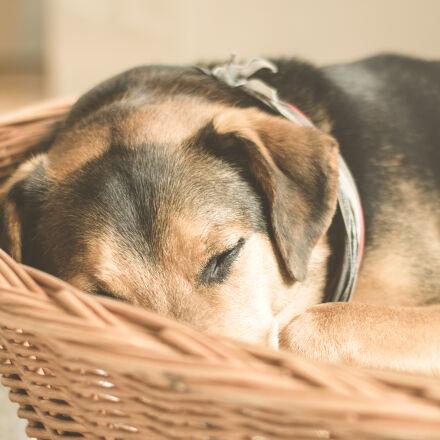 adorable, animal, basket, cuddly, Nikon D5300