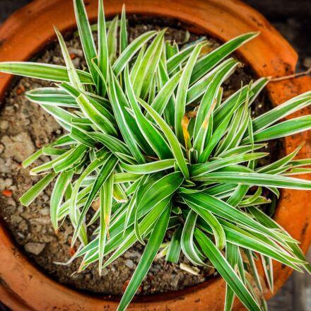 plant, tree, green, Canon EOS 750D