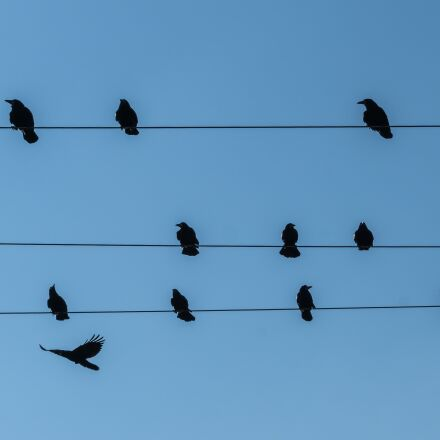 stare, power line, birds, Sony ILCA-77M2