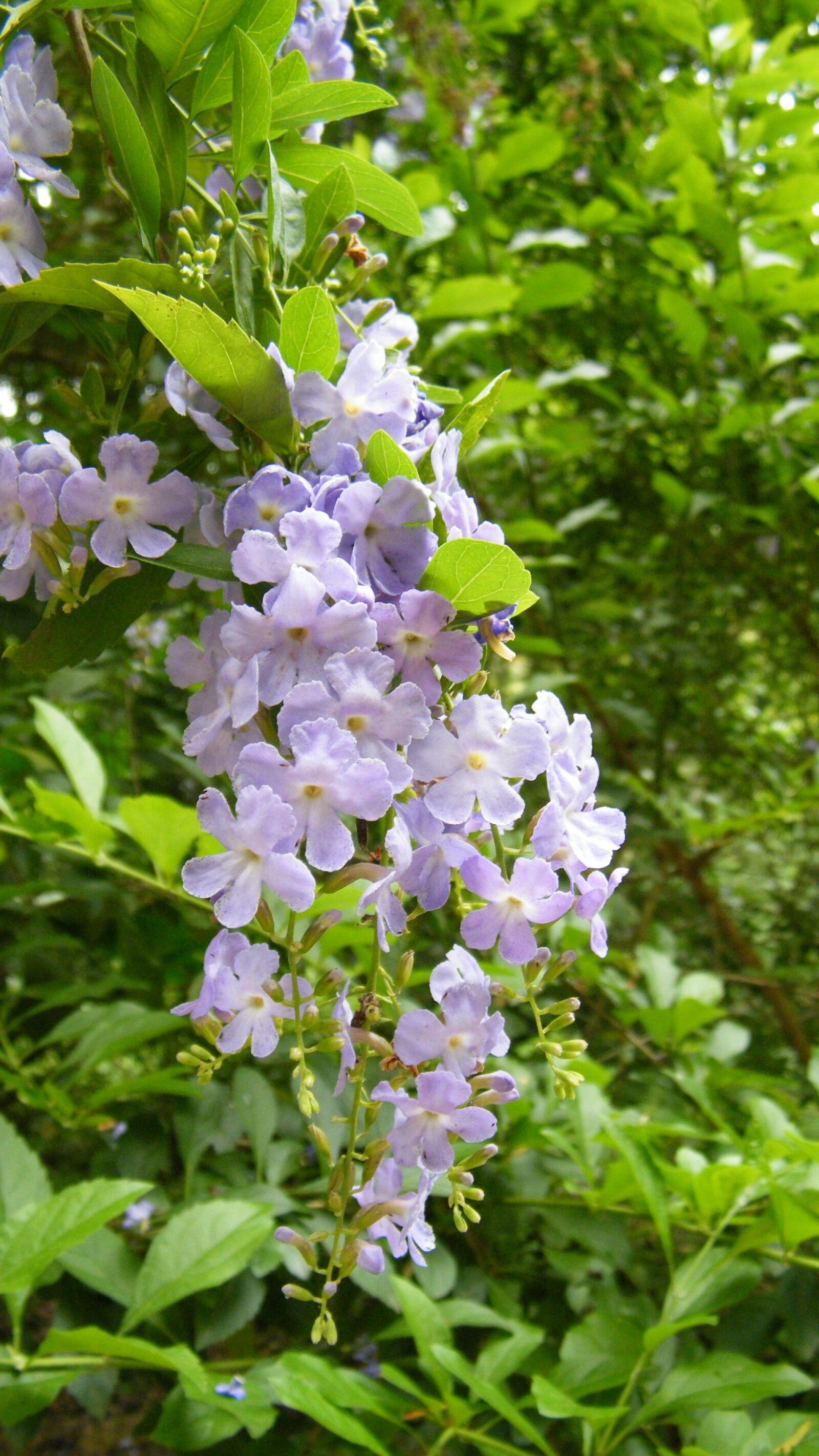 "Fujifilm FinePix S2000HD sample photo. ""Flower, flower string, purple"" photography"