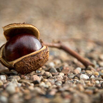 chestnut, autumn, prickly, Sony ILCE-7S