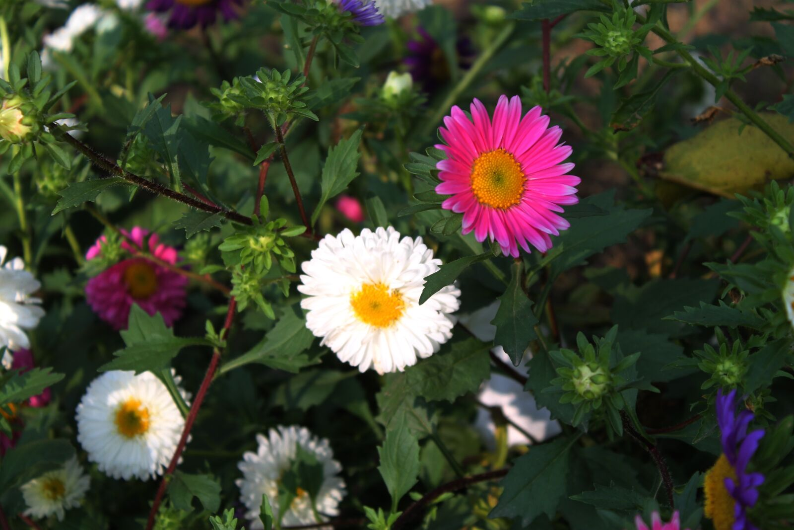 """Canon EOS 1100D (EOS Rebel T3 / EOS Kiss X50) sample photo. """"Flower, red, white"""" photography"""