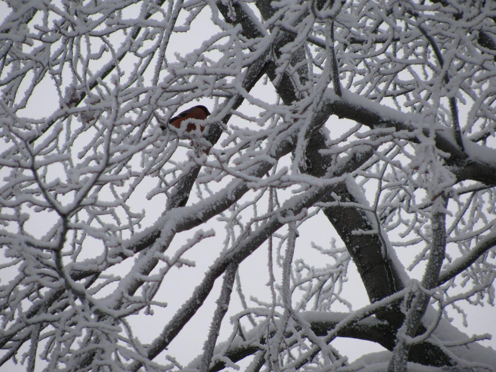 "Canon PowerShot SX110 IS sample photo. ""Winter, bird, tree"" photography"