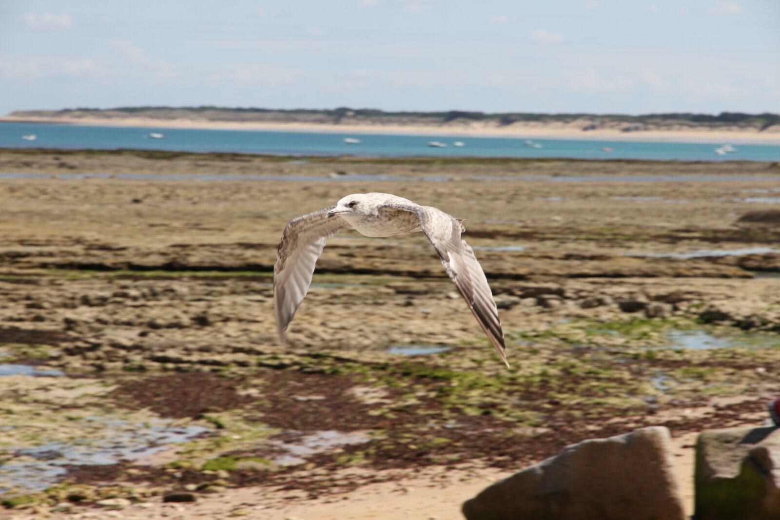 "Canon EOS 7D sample photo. ""Seagull, fly, sea"" photography"