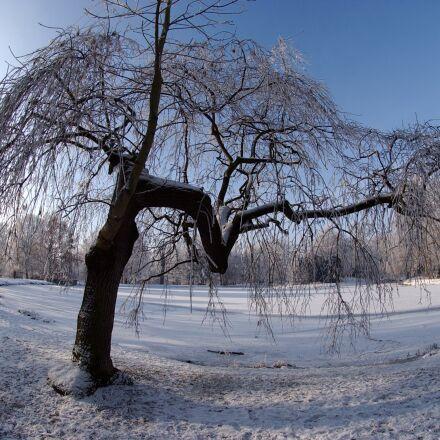 city park gotha, ice, Nikon D1H