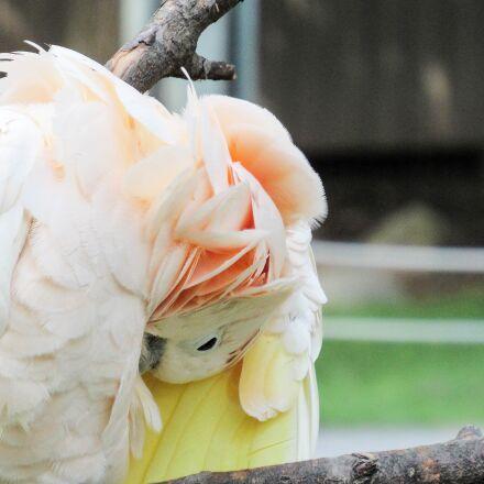 bird, parrot, nature, beautiful, Canon POWERSHOT SX520 HS