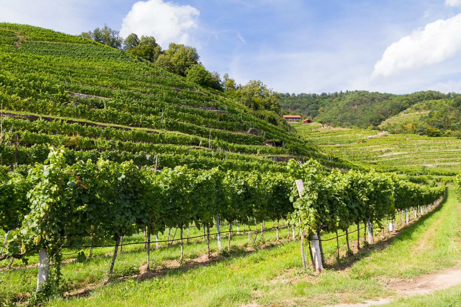 """Canon EOS 7D sample photo. """"Landscape, vineyard, in the"""" photography"""