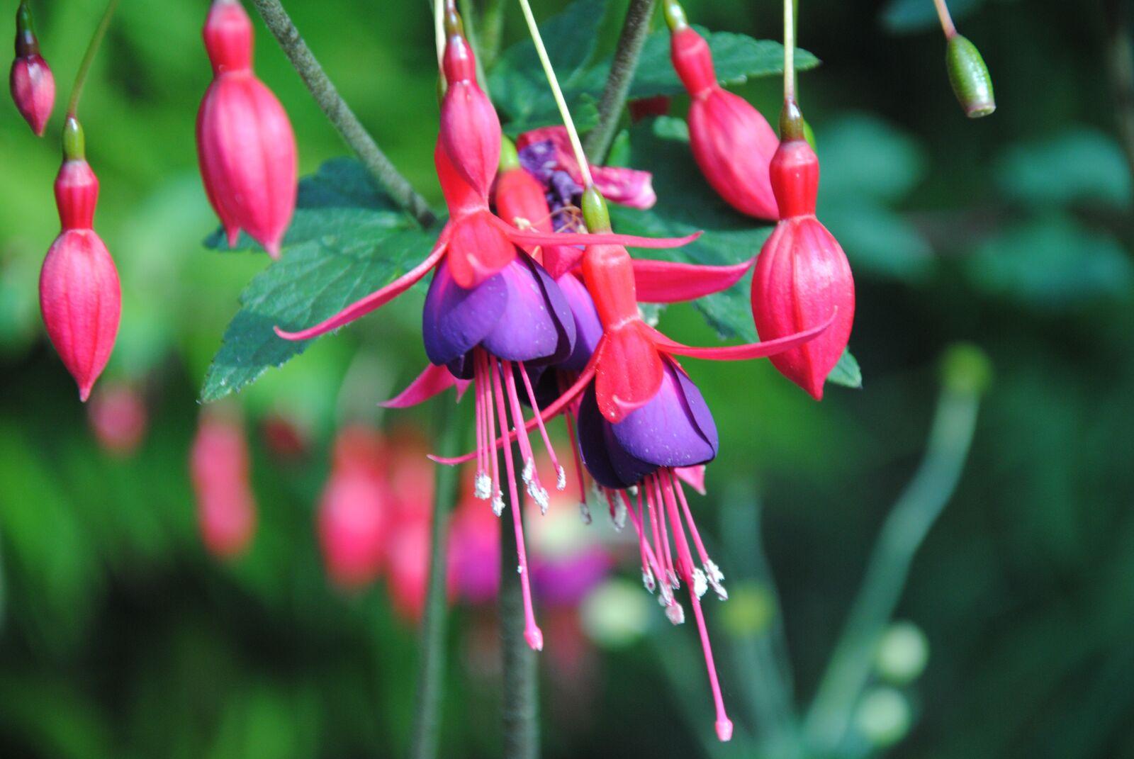 "Nikon D3000 sample photo. ""Pink colour, flower, flower"" photography"