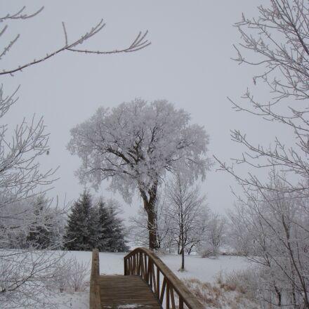 tree, winter, footbridge, Sony DSC-T70