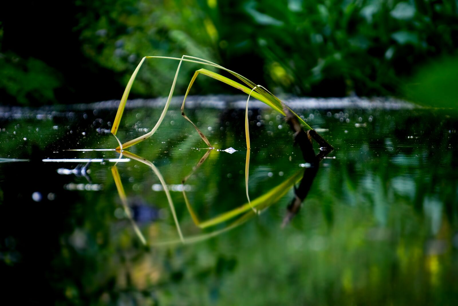 """Sony a6000 sample photo. """"Plant, water, aquatic"""" photography"""
